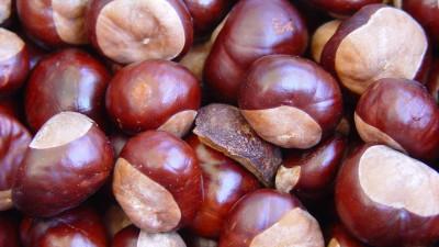 chestnuts-1329090